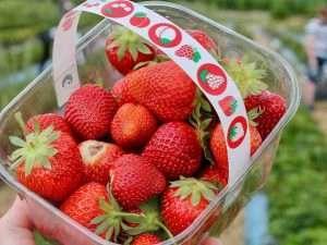 Strawberries Tour Sat 20 Nov
